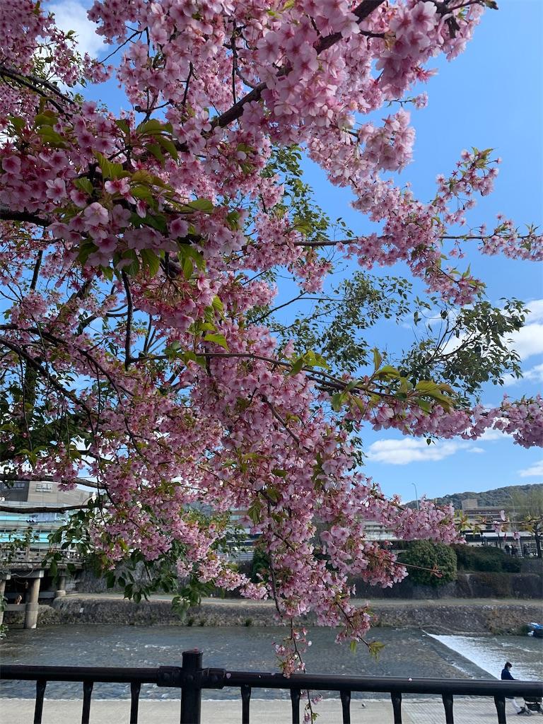 f:id:vika-kyoto:20200306130316j:image