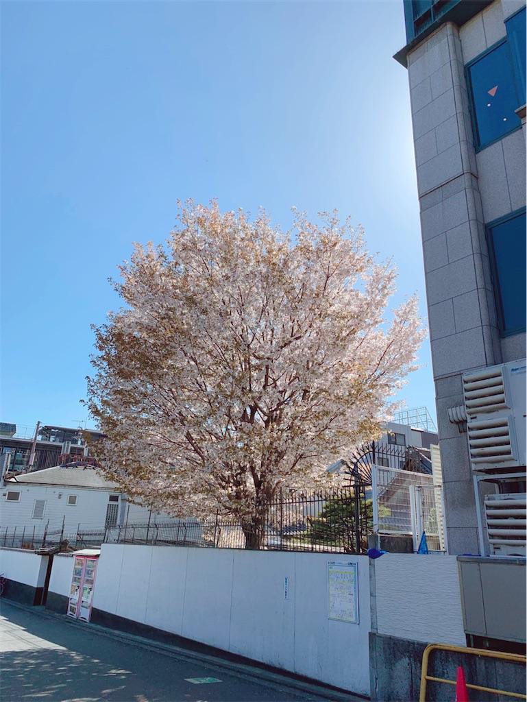 f:id:vika-kyoto:20200327174523j:image