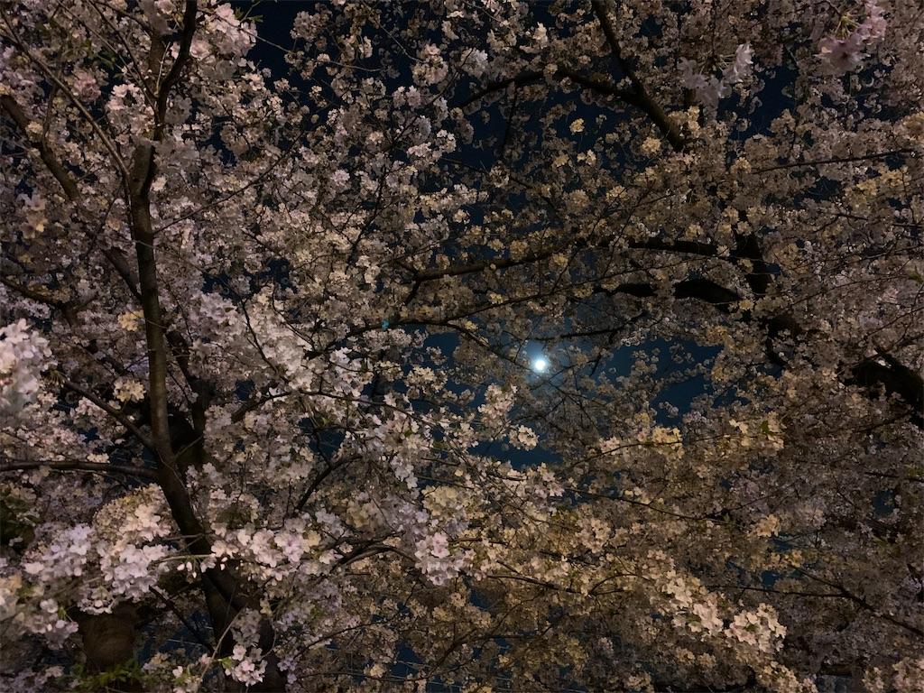 f:id:vika-kyoto:20200408170252j:image