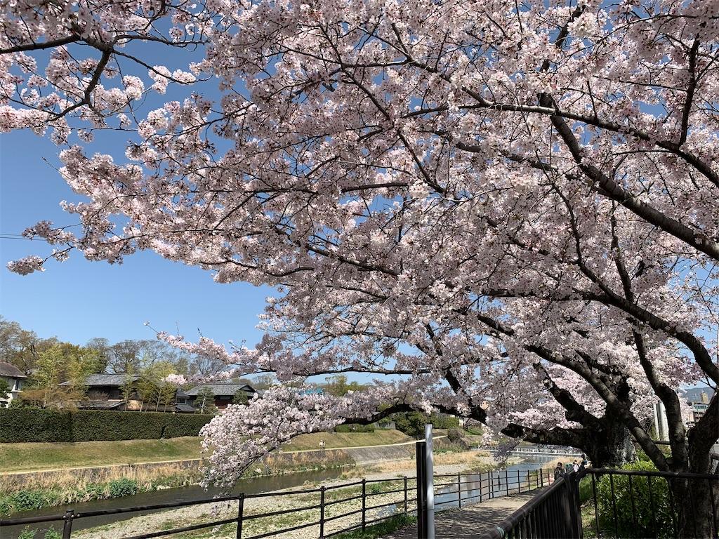 f:id:vika-kyoto:20210403073508j:image