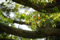浜松城公園