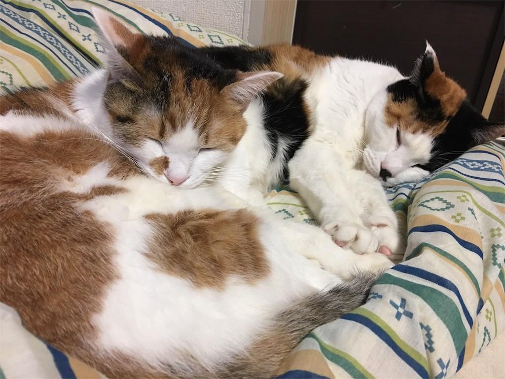 f:id:violet-cat:20170129155038j:image