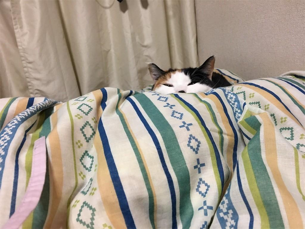 f:id:violet-cat:20170206145507j:image