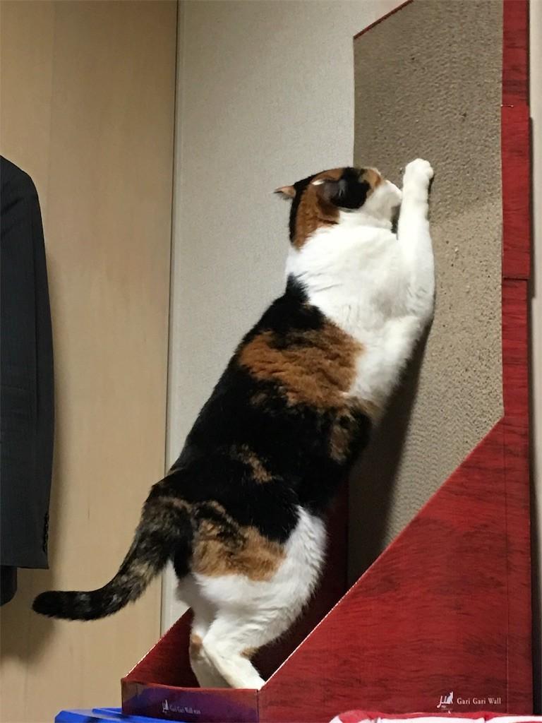 f:id:violet-cat:20170209174527j:image