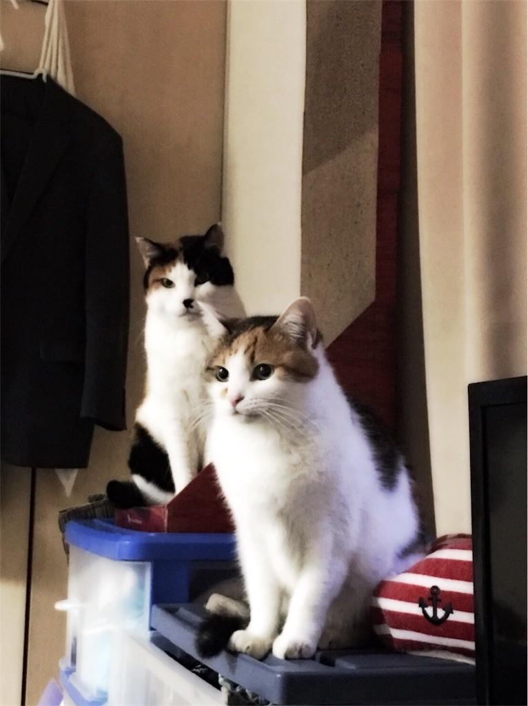 f:id:violet-cat:20170305005435j:image