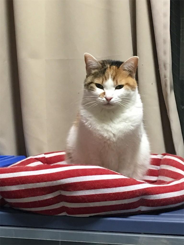 f:id:violet-cat:20170315005034j:image