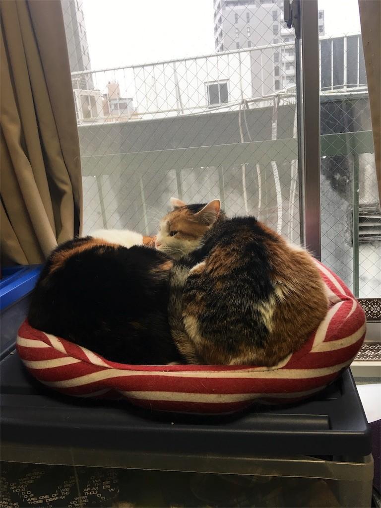 f:id:violet-cat:20170409182835j:image