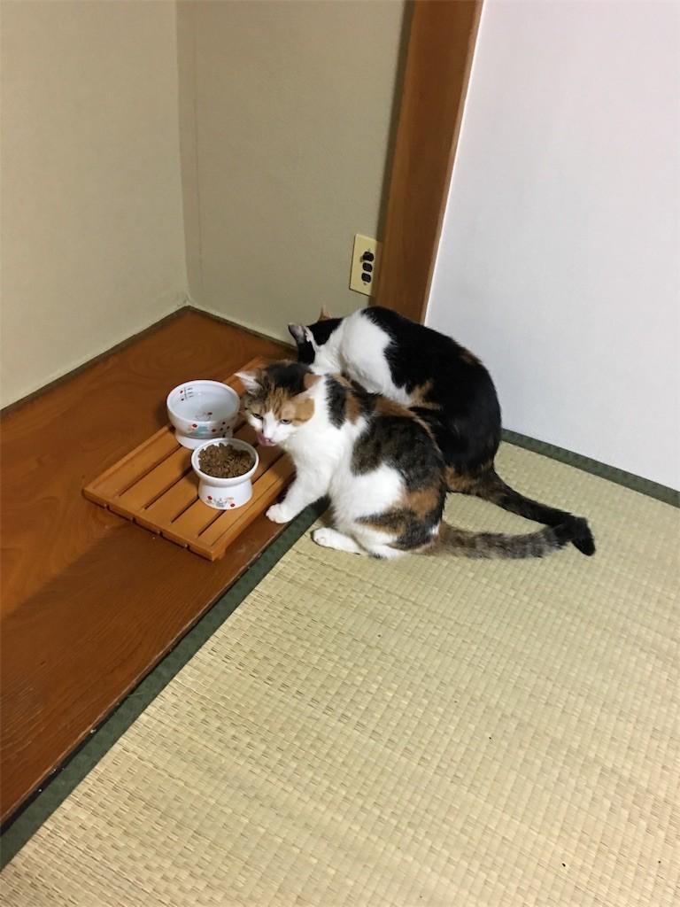 f:id:violet-cat:20180831075215j:image
