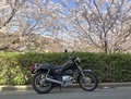 桜とSR125
