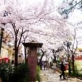 2016年4月 宝塚・花のみち