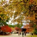 神護寺の紅葉2017年11月 ①