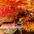 神護寺の紅葉2017年11月 ④
