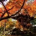 比叡山坂本・紅葉狩り2017年11月