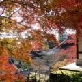 西教寺の紅葉 2017年11月②