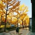 御堂筋の銀杏並木 2017年12月