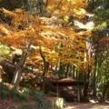 宇治・大吉山(仏徳山)の紅葉① 2017年11月