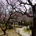 名勝 小野梅園