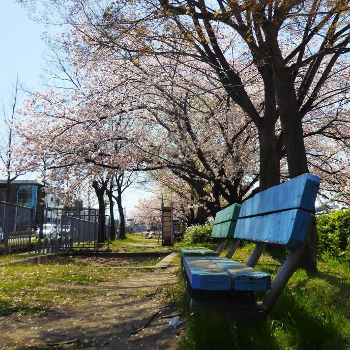 京都・桜Ⅱ/サイクリング③/青いベンチ