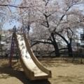 京都・桜Ⅱ/サイクリング⑤/鴨川沿いの公園