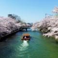 京都・桜Ⅱ/サイクリング⑦/十石船