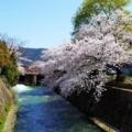 京都・桜Ⅱ/サイクリング13/夷川