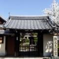 京都・桜Ⅱ/サイクリング19/松風天満宮と狛犬と桜