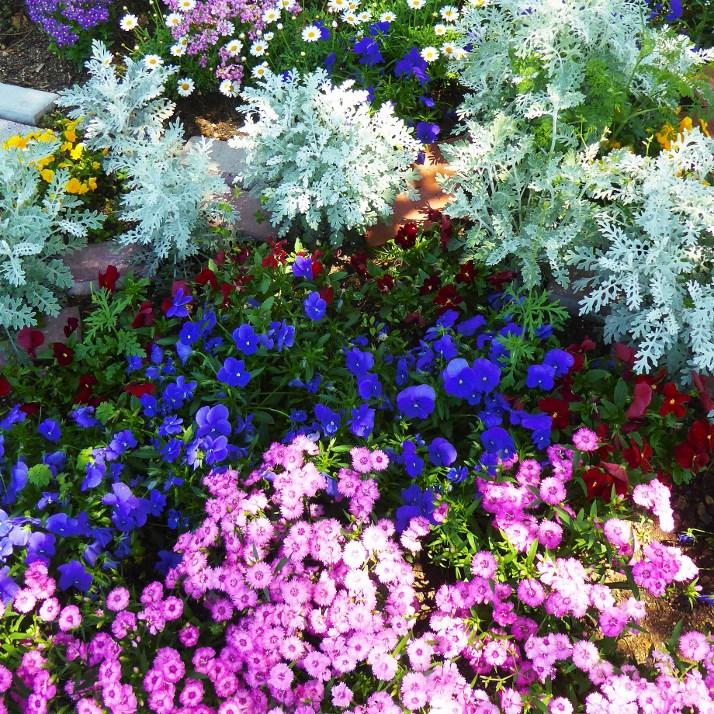 五月の花壇