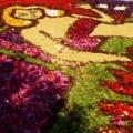 インフィオラータ神戸へ③ 北野坂「神戸の女性はライオン」
