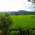 夏景色/和歌山の車窓から