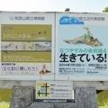 和歌山県立博物館&近代美術館2014
