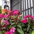 花とレトロ看板