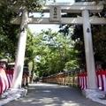 春木弥栄神社1 / 鳥居を抜ければ そこは眩しい過去の国