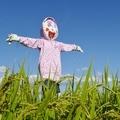 ジョギング① 2014年9月14日 喜ぶ子供案山子