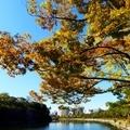 大阪城のお堀の紅葉 11月4日