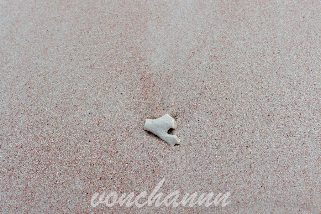 ホースシューベイビーチのピンクの砂浜と白いサンゴ
