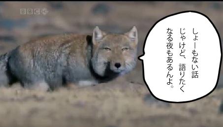 f:id:wa-wan:20180516143725j:plain