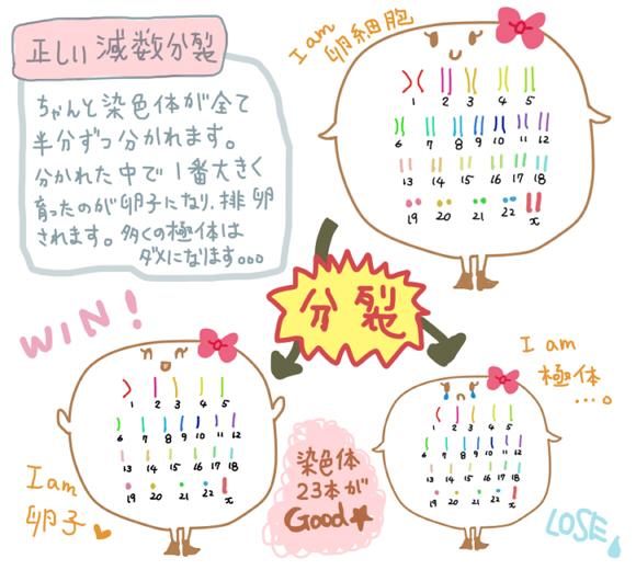 f:id:wa-wan:20181207020908j:plain