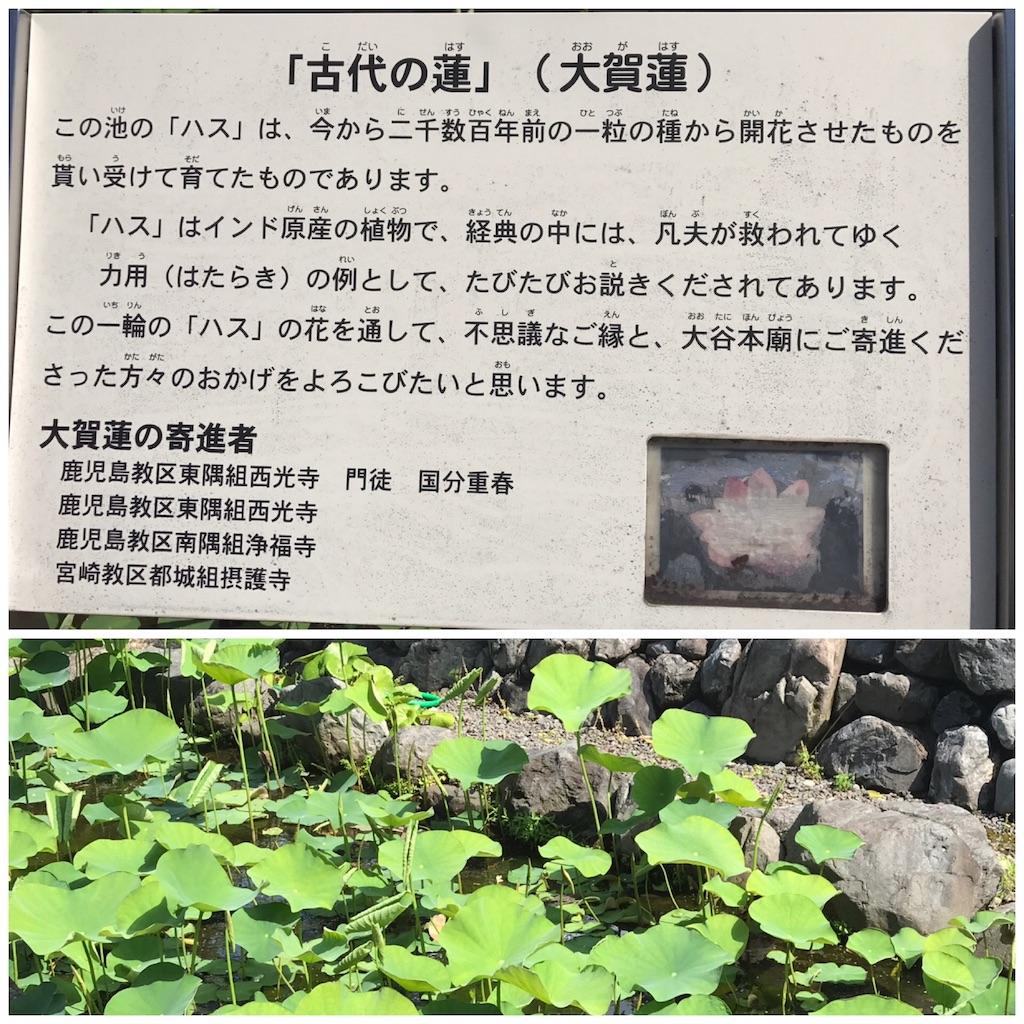 f:id:wa14007:20170527171017j:image