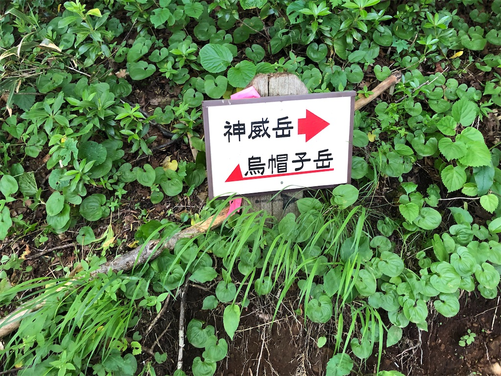 f:id:wachiyo1030:20200710212915j:image