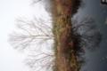 池の中に逆さの木