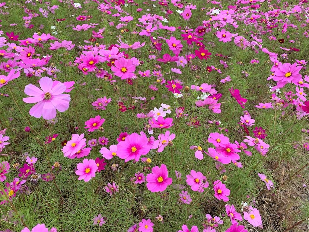 f:id:wadaiko_shinju:20191104145628j:image