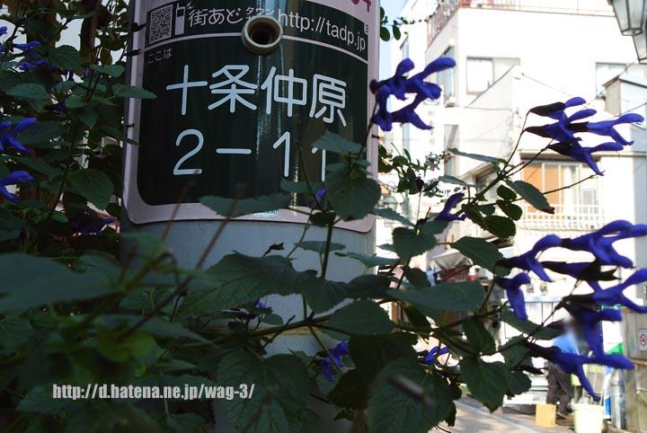 f:id:wag-3:20131202174948j:image:w360