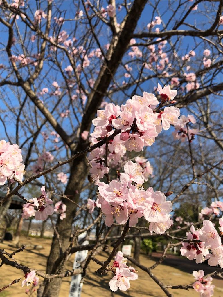 f:id:wagashi-okeya:20190324121554j:image