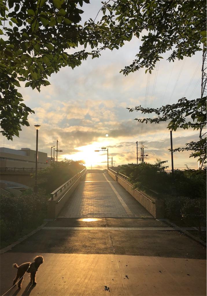 f:id:wagashi-okeya:20190706161741j:image