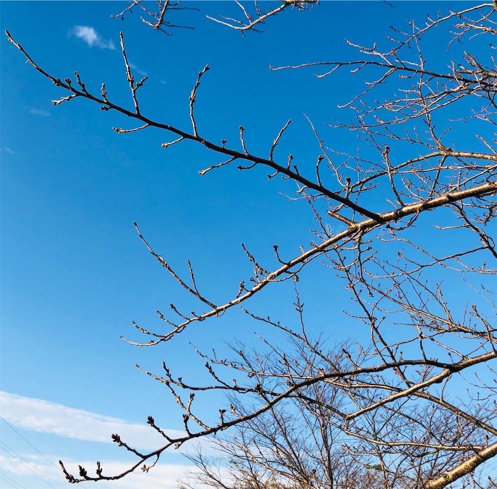 f:id:wagashi-okeya:20191206110815j:image