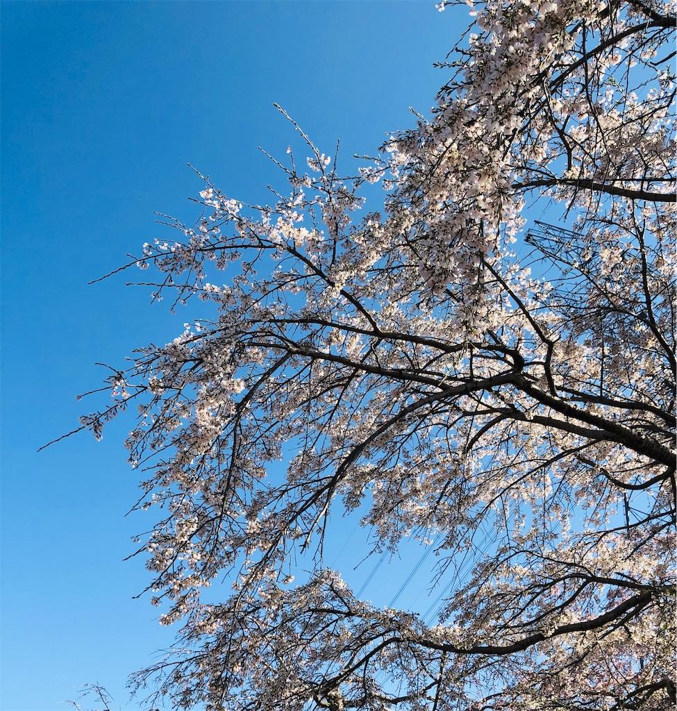 f:id:wagashi-okeya:20200112072439j:image
