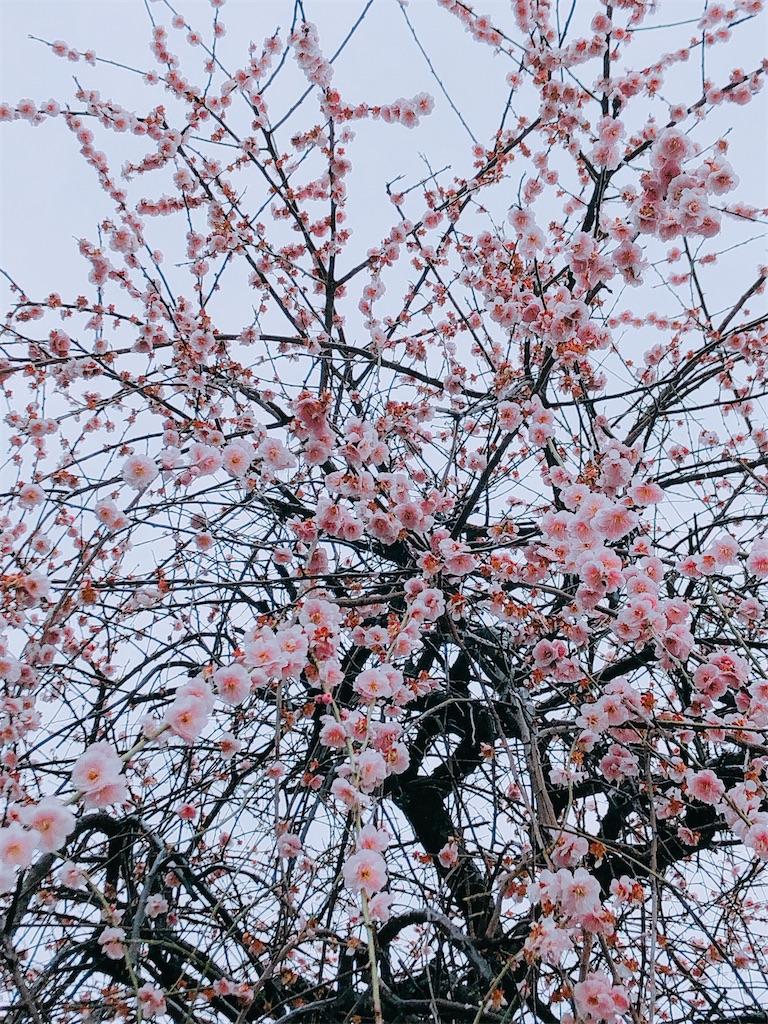 f:id:wagashi-okeya:20200303193734j:image