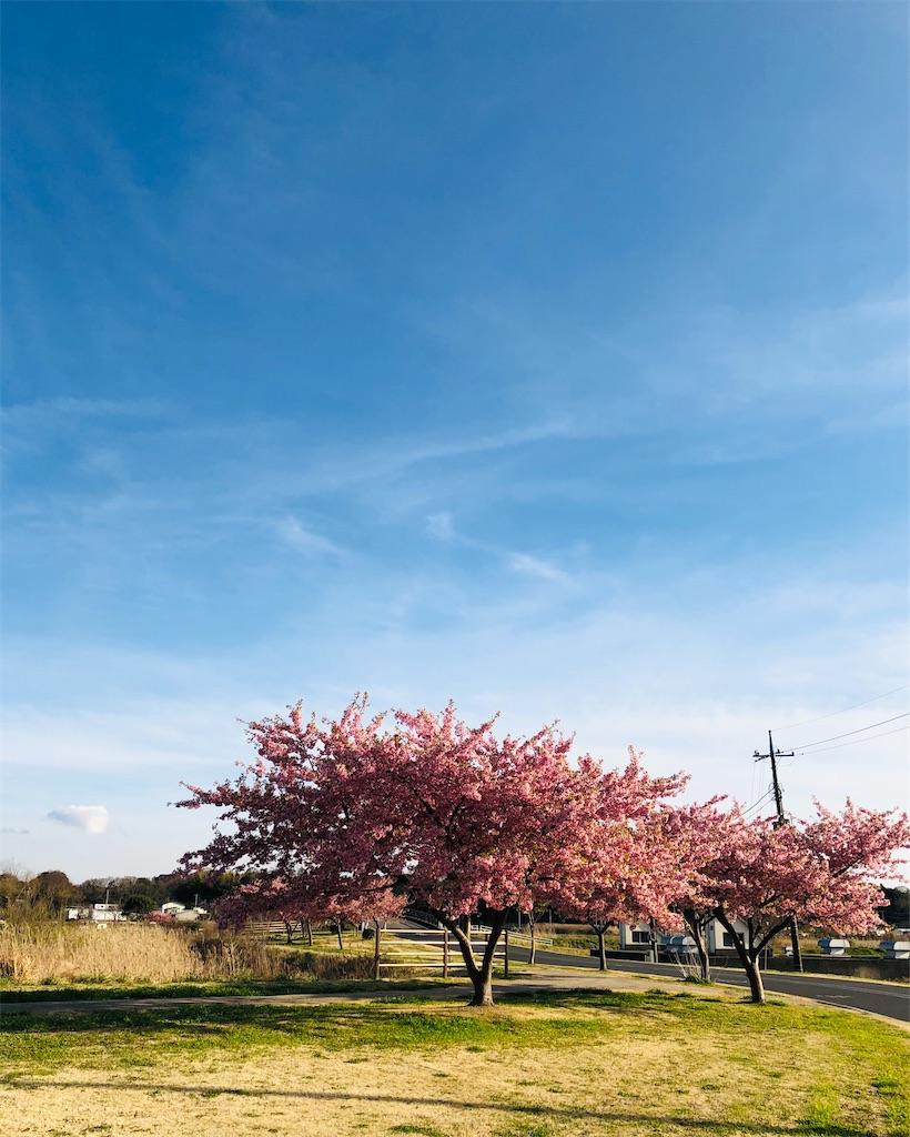 f:id:wagashi-okeya:20200307185927j:image