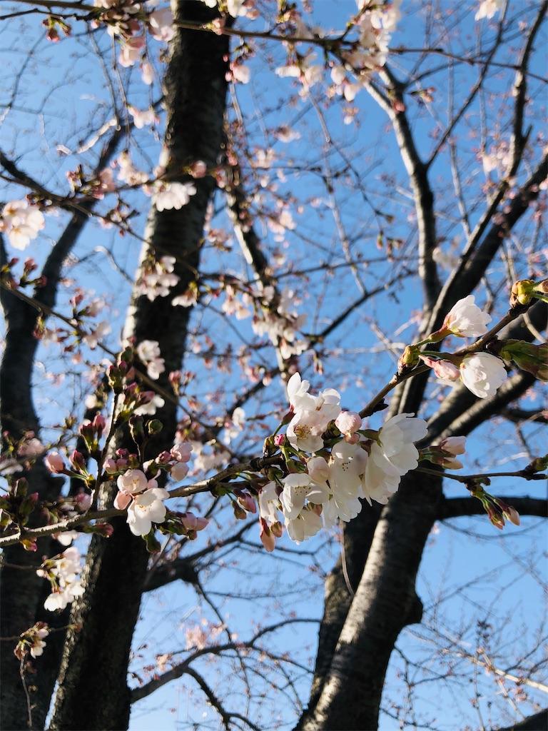 f:id:wagashi-okeya:20200322114344j:image