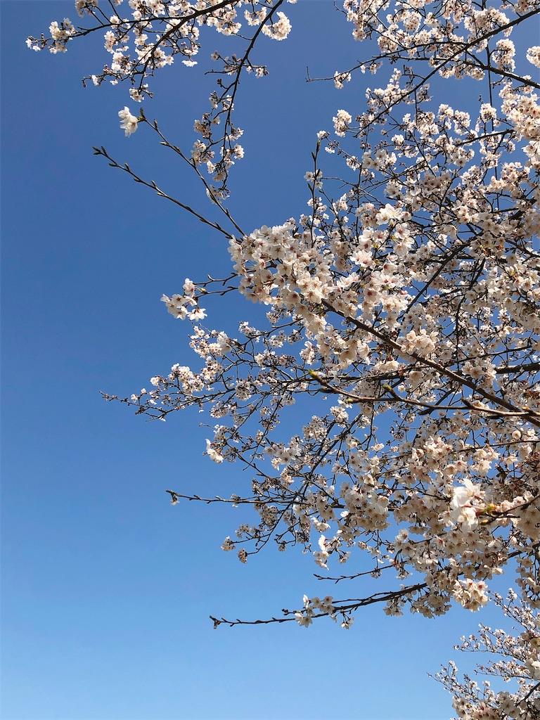 f:id:wagashi-okeya:20200327212139j:image